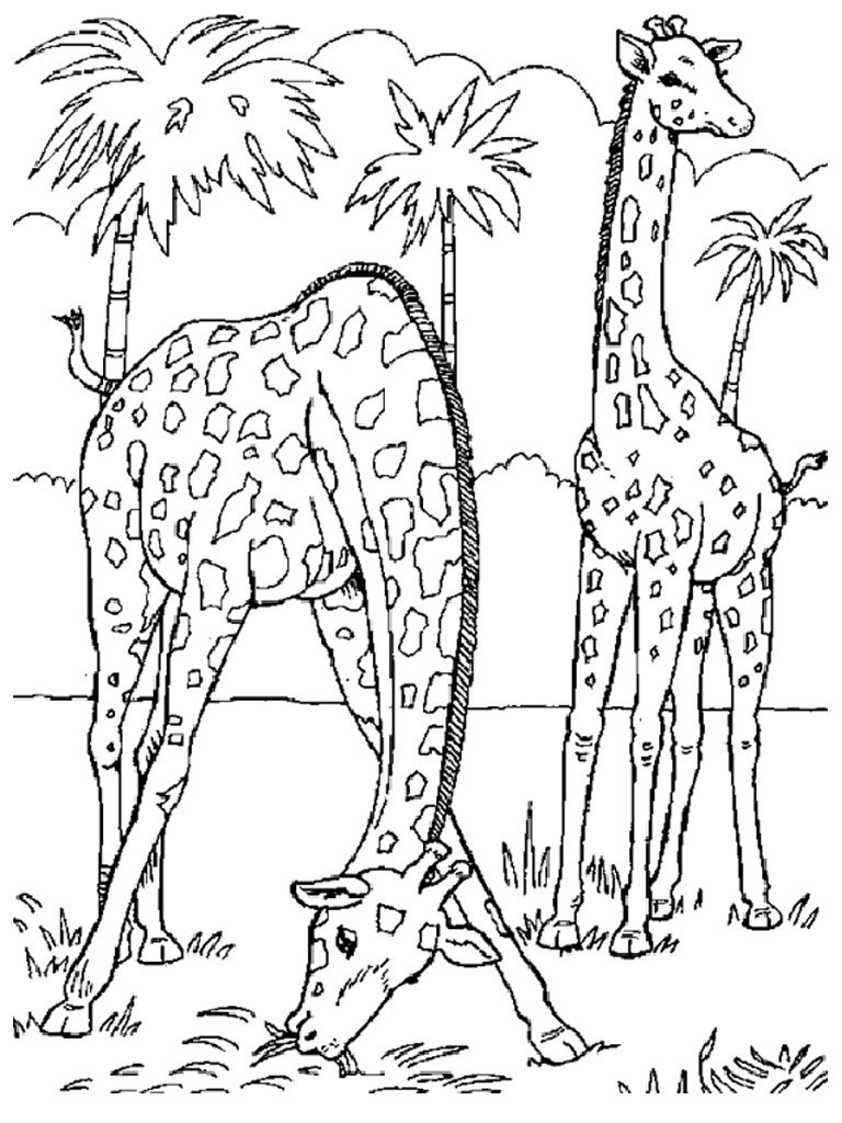 wild animals and coloring pages - photo#18